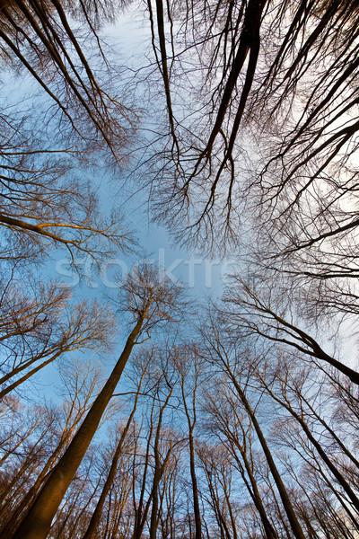 Kroon bomen blauwe hemel harmonisch tak structuur Stockfoto © meinzahn