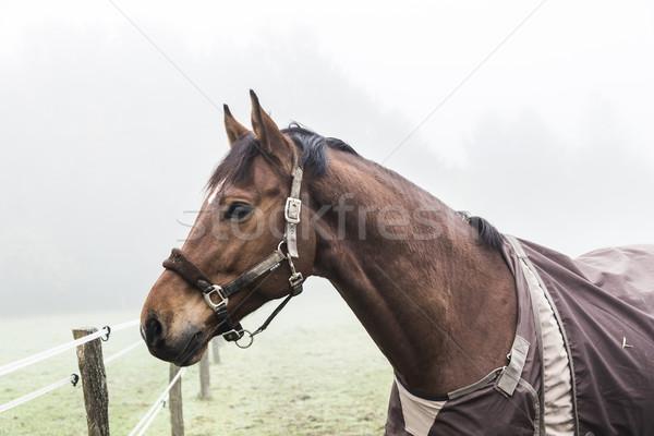 лошадей луговой тумана зеленый природы пейзаж Сток-фото © meinzahn