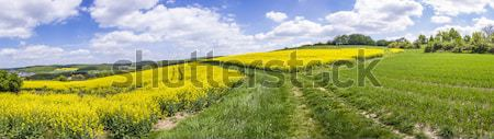 Spring countryside of yellow rapeseed fields in bloom   Stock photo © meinzahn