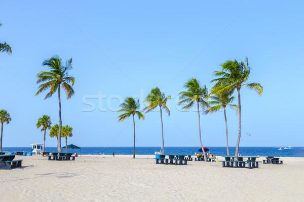 Mooie fort lauderdale strand tropische kokosnoot bomen Stockfoto © meinzahn