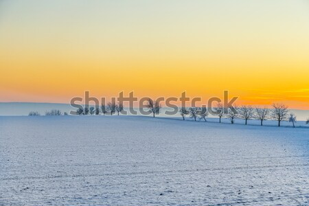winter landscape with tree alley  in sunset  Stock photo © meinzahn