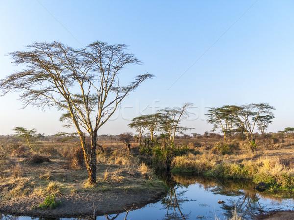 Naplemente Serengeti park fa nap Stock fotó © meinzahn