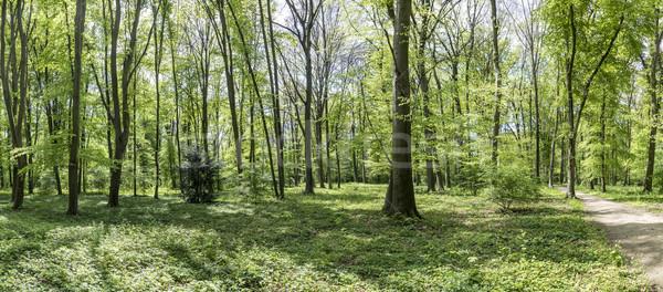 Erdő park angol kert Stock fotó © meinzahn