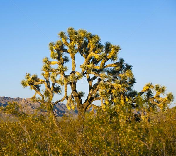 Boom warm heldere licht natuur landschap Stockfoto © meinzahn