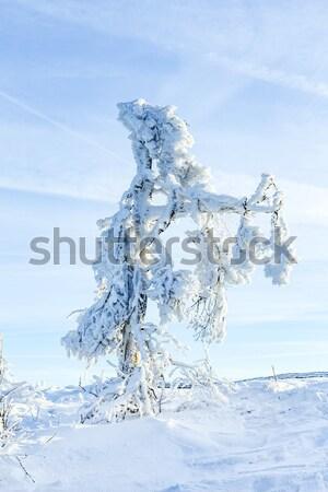 Sunshine under the winter calm mountain landscape with beautiful Stock photo © meinzahn