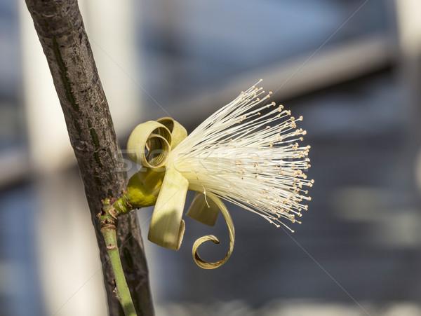 Bush arbre tropicales région détail Photo stock © meinzahn