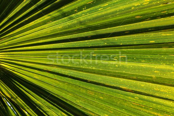 Palme armonica ombra natura sfondo verde Foto d'archivio © meinzahn
