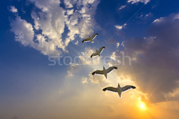 golden sunset with clouds and flock of birds Stock photo © meinzahn