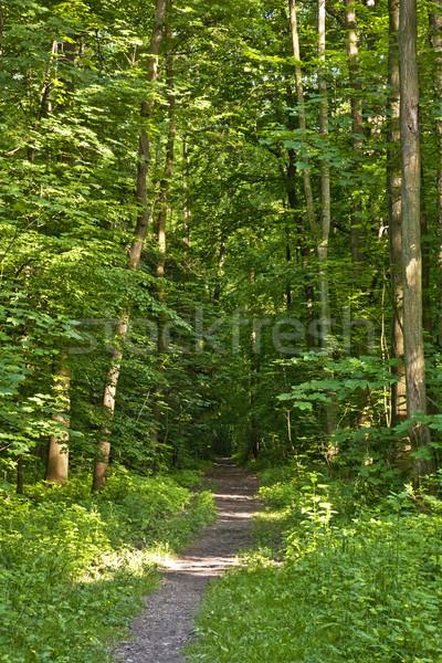 Bos parcours zonnestralen groene voorjaar boom Stockfoto © meinzahn