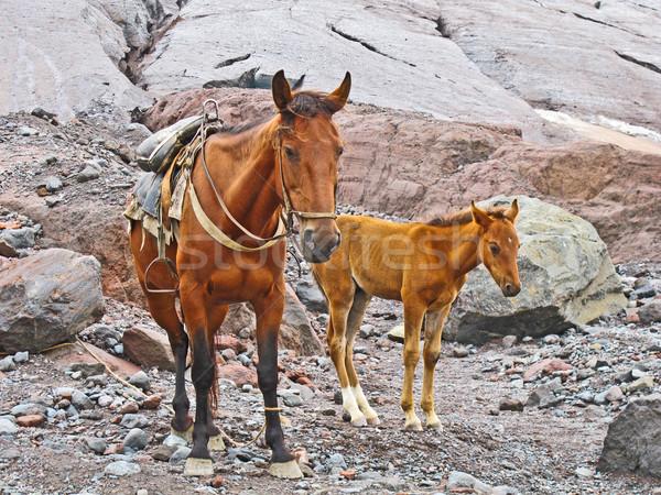 Pferde Transport Waren heilig Berg Stock foto © meinzahn