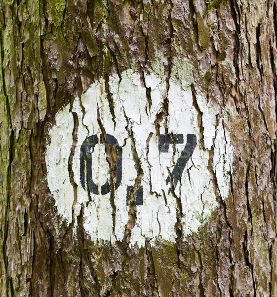 Modèle arbres forêt distance marqueur vert Photo stock © meinzahn