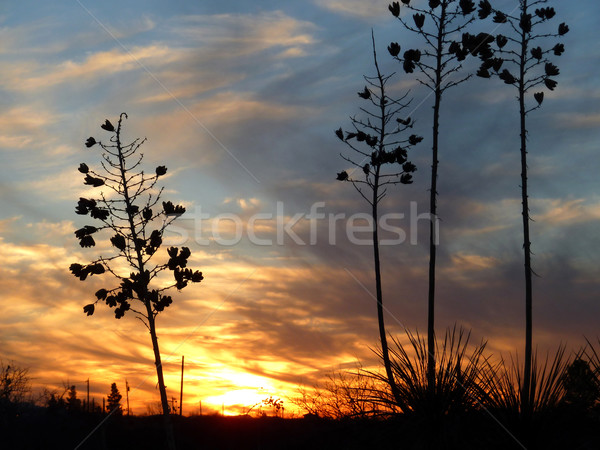 romantic sunset with lonely plant and bright horizon Stock photo © meinzahn