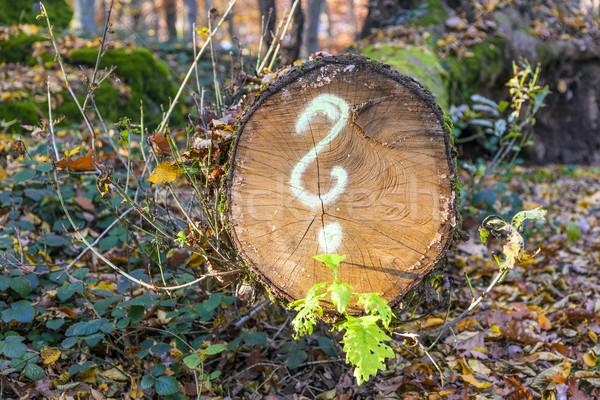 Fa erdő festett kérdőjel fa építkezés Stock fotó © meinzahn