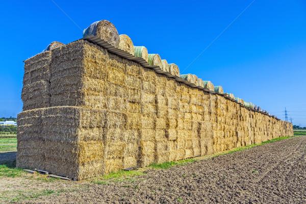 Baal stro najaar intensief kleuren natuur Stockfoto © meinzahn