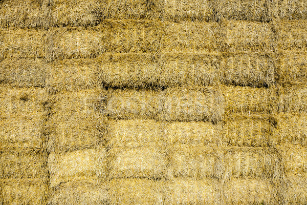 bale of straw in autumn in intensive colors Stock photo © meinzahn