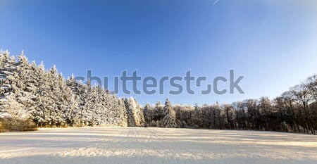 snow covered branches of a tree under blue sky Stock photo © meinzahn