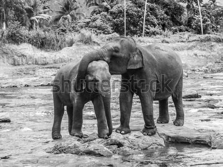 Elefanti amore fiume Coppia verde viaggio Foto d'archivio © meinzahn