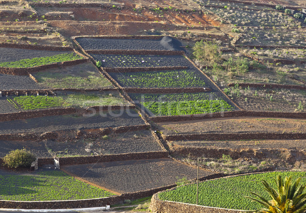 fields in rural hilly area in Lanzarote  Stock photo © meinzahn