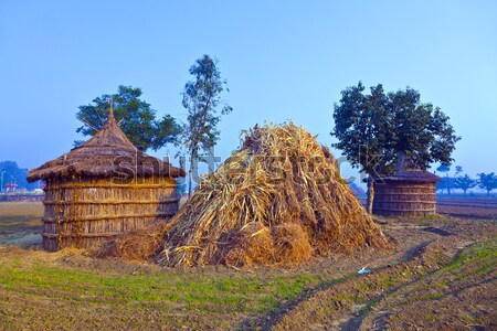 Hut landbouwer ochtend mist velden boom Stockfoto © meinzahn