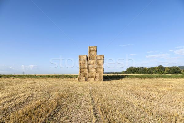 области урожай тюк соломы Blue Sky продовольствие Сток-фото © meinzahn