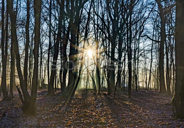 風光明媚な オーク 森林 太陽 冬 時間 ストックフォト © meinzahn