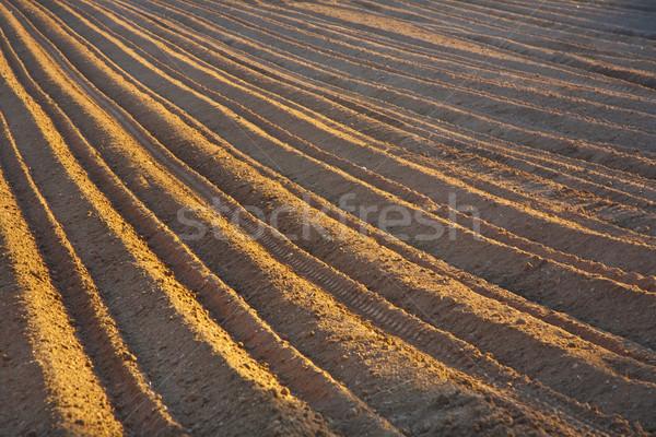 Nowo dziedzinie tekstury charakter krajobraz tle Zdjęcia stock © meinzahn