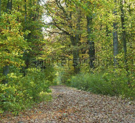 Camino roble forestales primavera naturaleza hoja Foto stock © meinzahn