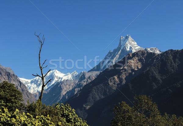 view to mountain  Machapuchare  Stock photo © meinzahn