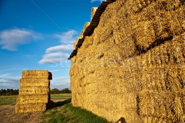 Bale paille intensive couleurs ciel soleil Photo stock © meinzahn