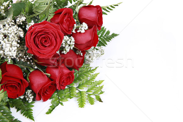 Red Roses on White Stock photo © melking