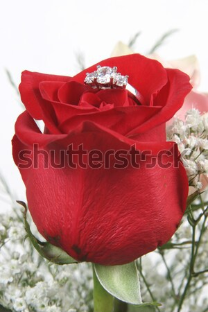 Red Rose in vase Isolated on white Stock photo © melking