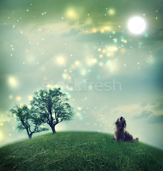 Dachshund dog in a magical landscape Stock photo © Melpomene