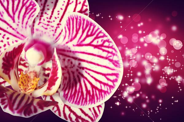 Orchidea fényes magenta gyönyörű textúra fény Stock fotó © Melpomene