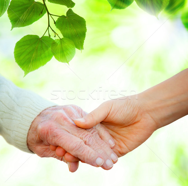 Mains tenant supérieurs feuilles vertes arbre main amour Photo stock © Melpomene