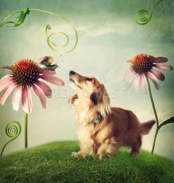 Dog and snail in friendship in fantasy landscape Stock photo © Melpomene