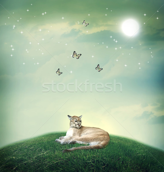 Cougar in fantasy hilltop with butterflies Stock photo © Melpomene