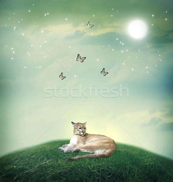 Puma fantezi kelebekler manzara doğa portre Stok fotoğraf © Melpomene
