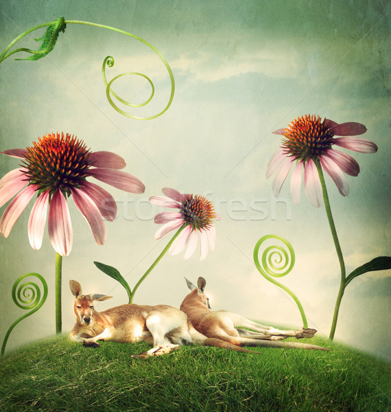 Kangaroo couples napping under flowers Stock photo © Melpomene