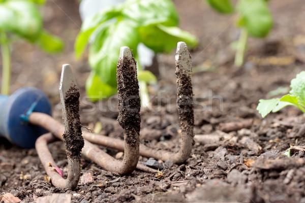 Garden small rake Stock photo © Melpomene