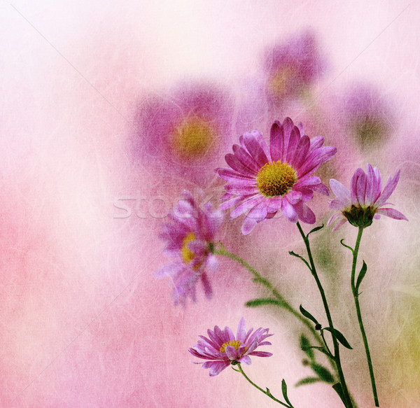 Vintage flower background Stock photo © Melpomene