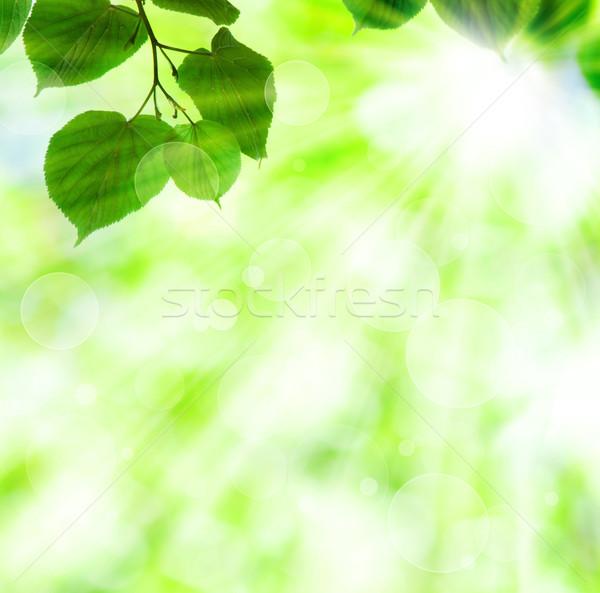 Wiosną słońce zielone liście błyszczący światła Zdjęcia stock © Melpomene