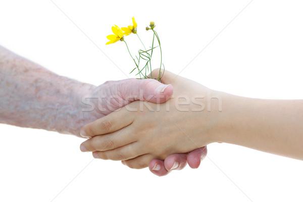 Stockfoto: Jonge · senior · vrouwen · gele · bloemen · witte