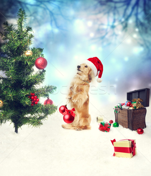 Dachshund dog decorating christmas tree Stock photo © Melpomene