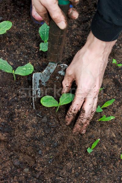Young Plants Growing  Stock photo © Melpomene