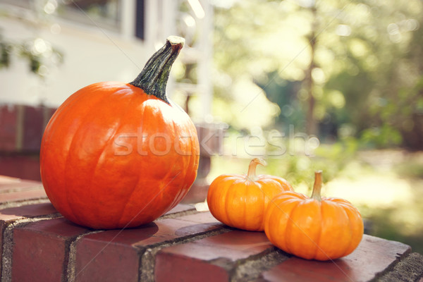Orange pumpkins by a house with sunshine Stock photo © Melpomene