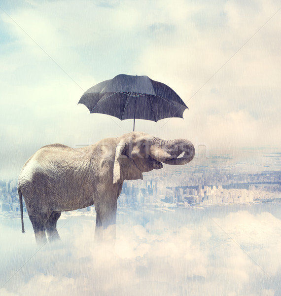 Elephant standing on the clouds Stock photo © Melpomene