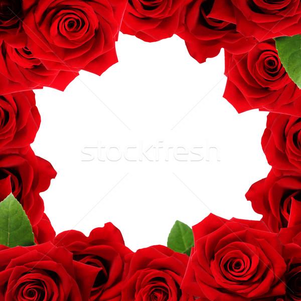 Red roses boarder Stock photo © Melpomene