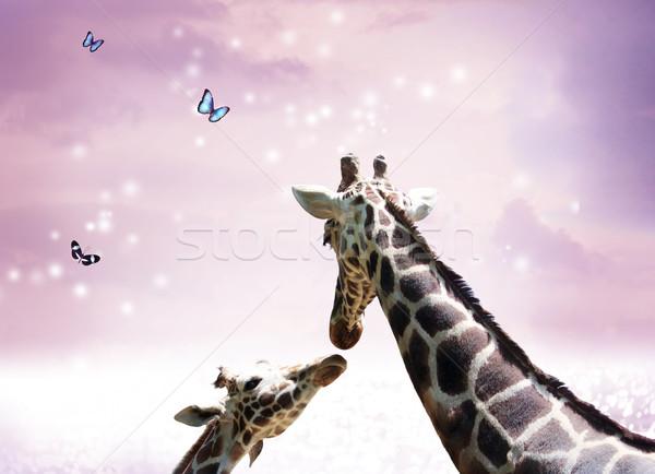Kettő zsiráfok szürkület anya gyermek barátság Stock fotó © Melpomene