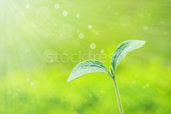 Stock photo: Young plant