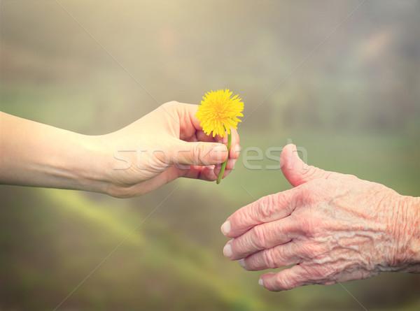 Supérieurs femme fleur jeune femme pissenlit Photo stock © Melpomene